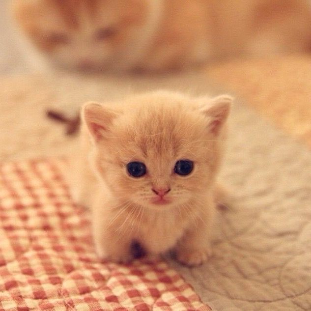 Little Kittens of Cuteness | cute | Commaful