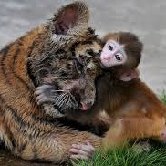 Monkeys Hugging Animals | cute | Commaful
