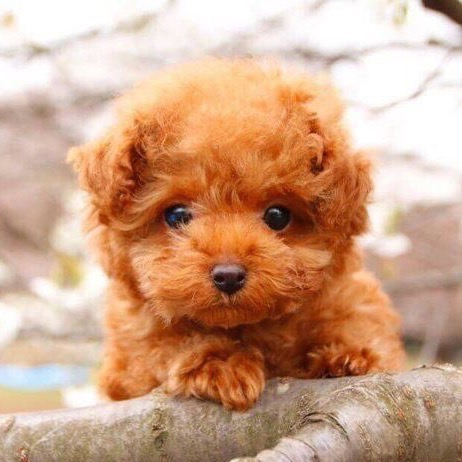 Cutest Puppy Ever Cute Commaful