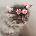 prettygirl_12
