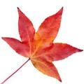 autumnpumpkin