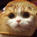 chibi_cat