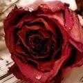 rosethepoet