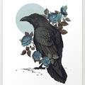raven0_0