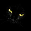 _black_