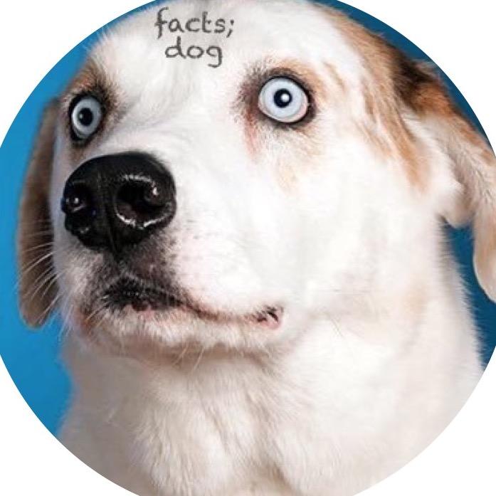 dog_rates