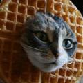 wafflecatz