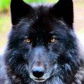 shadowwolf17