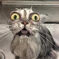 uglycat