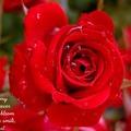 neha_uday
