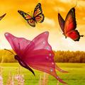 butterflysquaw