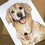 Pet portraits   Commissions done by Celeste Cardew Art pet stories