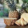 𝙿𝚒𝚗𝚎𝚊𝚙𝚙𝚕 𝙿𝚒𝚣𝚊𝚊 (𝙲𝚞𝚛𝚜𝚎𝚍) pineapples stories