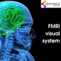 Finding an MRI Visual System mrivisual stories