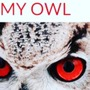 My owl owl stories