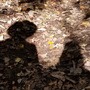 Our Shadows wisdom stories