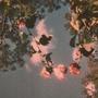 Purple flowers~ feelings stories