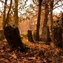 The Graveyard. poem of the day stories