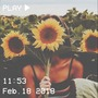 𝚜𝚞𝚗𝚏𝚕𝚘𝚠𝚎𝚛 sunflower stories