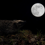 A Hedgehog, A Dreamer...  feelings stories