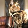 So I got a cat cat stories