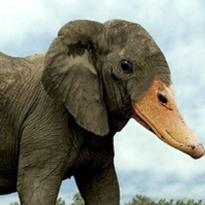 Elephant Duck elephant duck stories