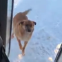 Bus Driver Feeds Hungry Stray Dog Every Day dog stories