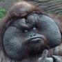 A Gorilla in my midst. stories