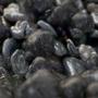 """Pebbles"" by Kieran Paul Farley personfication stories"
