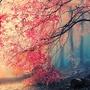 Sakura sakura stories
