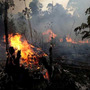 Norvergence reveals the real culprit of Amazon deforestation and wildfires norvergence llc stories
