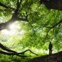 Forest challenge stories