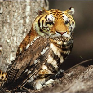 Tiger Owls! animals stories