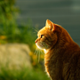The Cat That Lived A Million Times cat stories