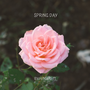 Spring Day (Song:BTS and also BLACKPINK:Stay)  orginal stories
