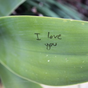 I Love You On A Leaf love nature stories