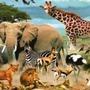 10 Animal fun facts    Part 7 animals stories