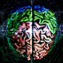 We are all Biological Simulations science stories