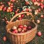 Apple- acrostic poem apple stories