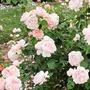 our   small  garden neville longbottom stories