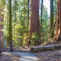 Sequoia  poetry stories