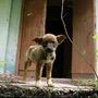 Broken - A Short Story   dog stories