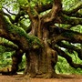 Symbol of Life tree stories