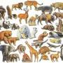 10 Animal fun facts   Part 3 animal stories