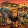 10 Animal fun facts     Part 2 animal stories