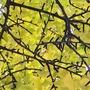 Unmoved twig stories