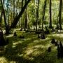 Jean Lafitte swamp stories