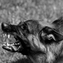 """""""Lost Dog"""" part 1 of 2 by James G. Boswell paranormal stories"""