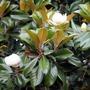 Look How My Magnolias Bloom spring stories