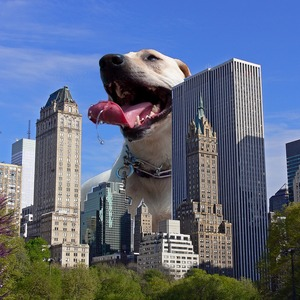 Super Giant Dogs dog photoshop stories